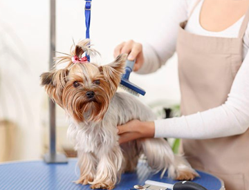 Pet Care Service Dubai