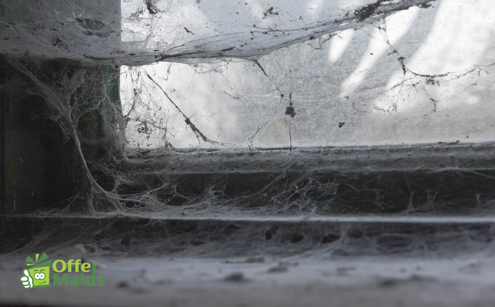 spider web on old uncleaned window in dubai